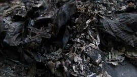 ashes staxtes minimal