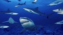 karxaries sharks thalassa sea