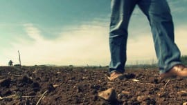 klostiki kanavi agrotiko agriculture
