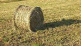 hay-field-bale-summer