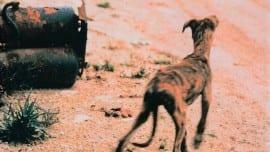dog animal zoa