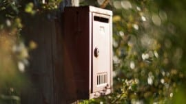 The wild letterbox